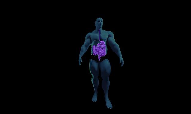 digestive-system-1788623_640