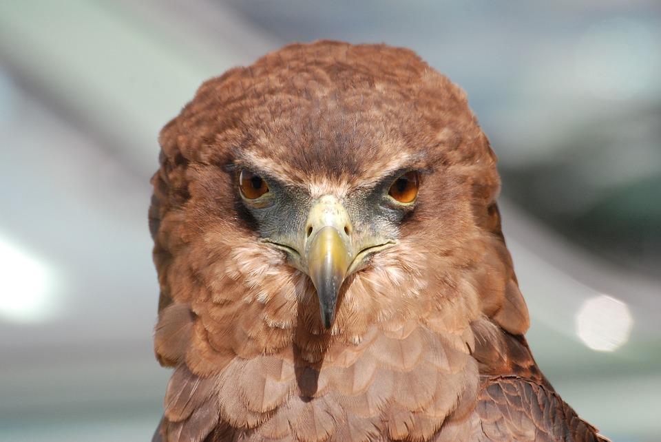 eagle-377202_960_720%e9%b7%b9%e3%81%ae%e7%9b%ae