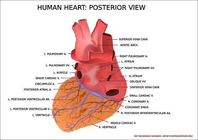 heart-147389_640