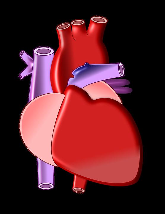 heart-497674_960_720
