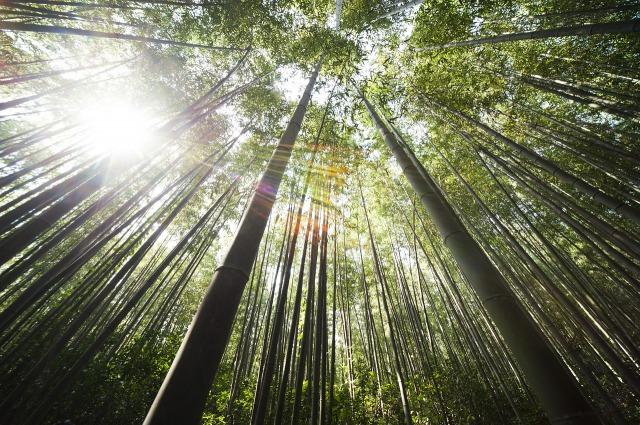竹のしなやかさ