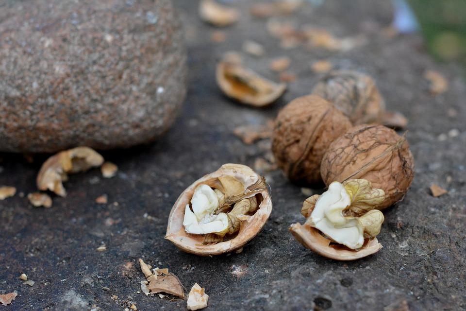walnut-1159603_960_720