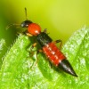 やけど虫の対策方法を知ろう!対処法や症状、注意点を紹介!発生しやすい場所は?