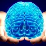 男性脳と女性脳の違いは?構造やホルモン、思考回路などの違いを紹介!