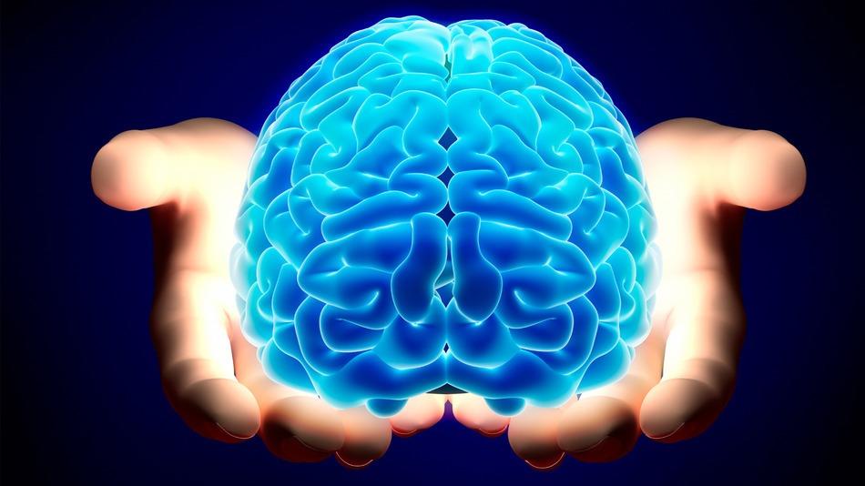 男性脳 女性脳 違い