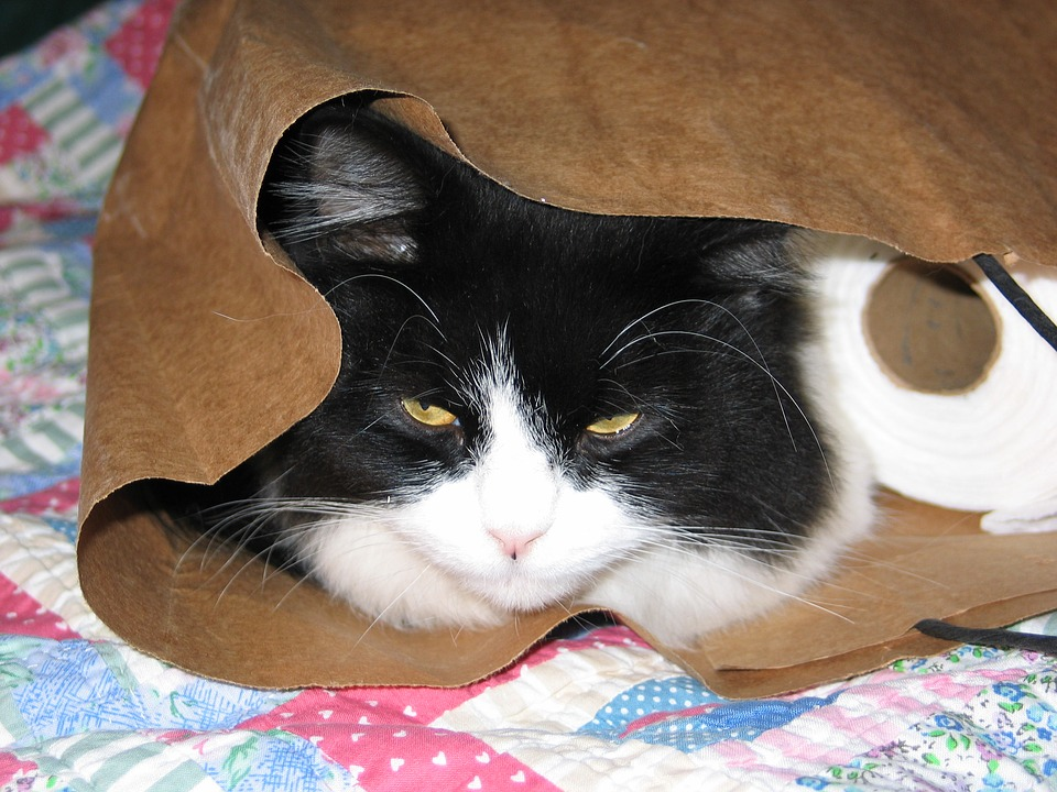 cat-1816646_960_720