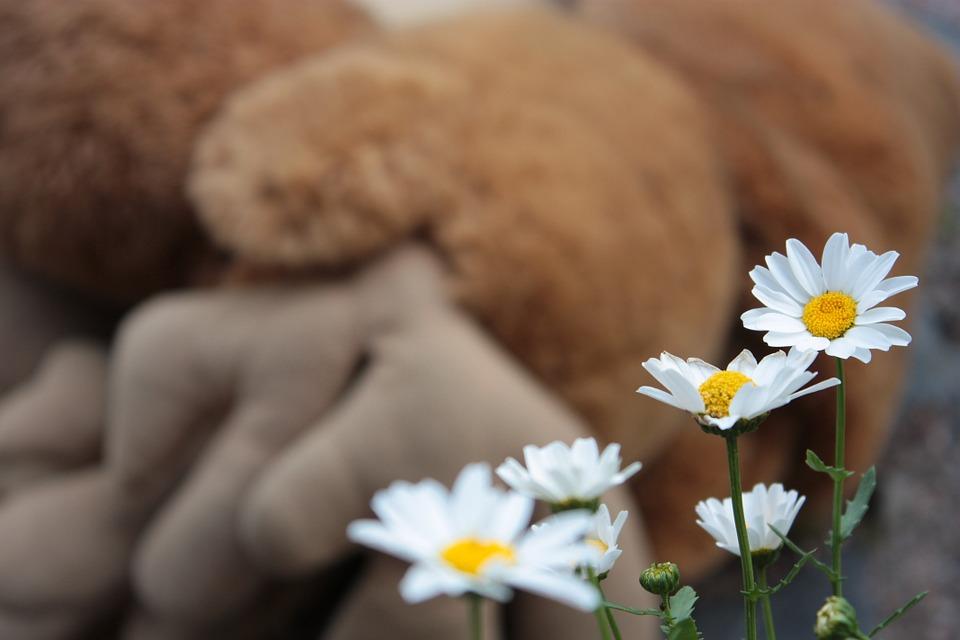 daisy-418959_960_720