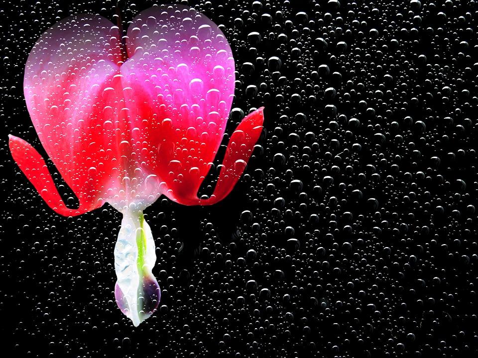 flower-1426754_960_720