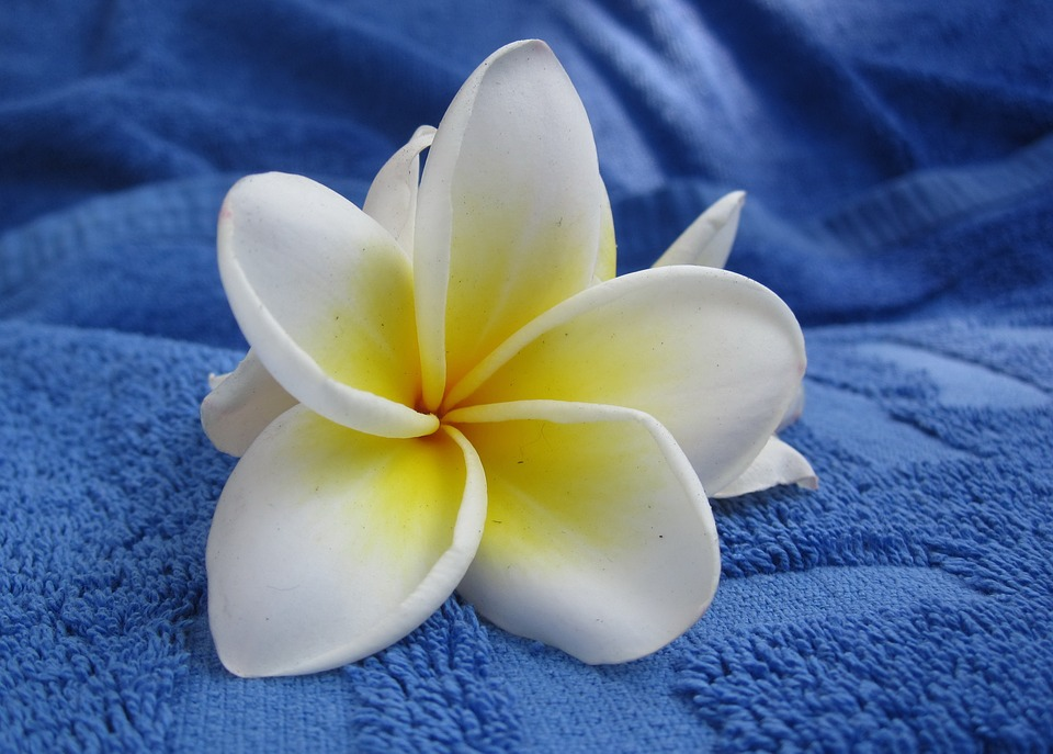 flower-409379_960_720