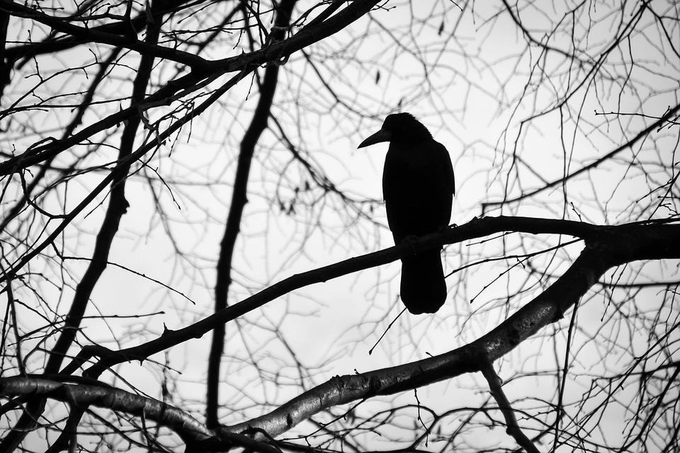 bird-2071185_960_720