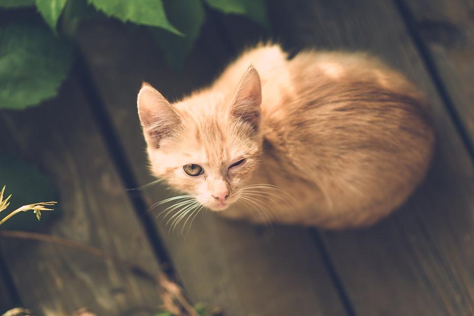 cat-1593064_960_720眼の病気