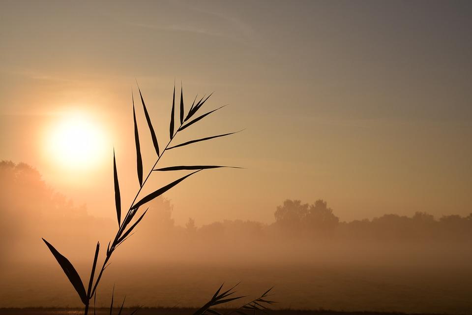 sunrise-1688100_960_720病気