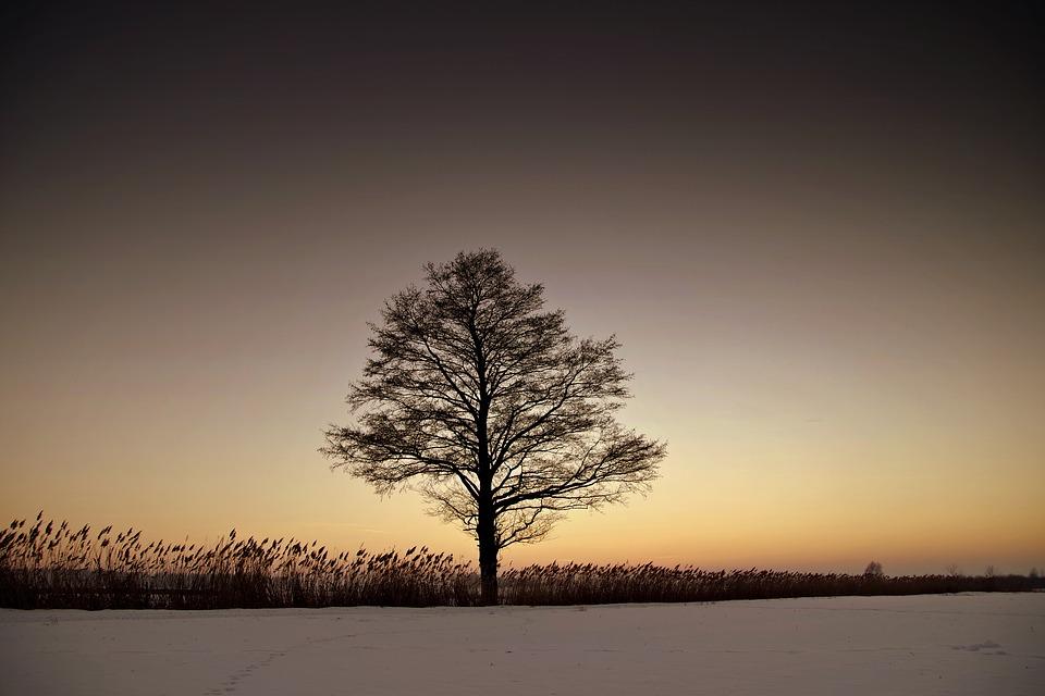 tree-2015872_960_720寂しい風景
