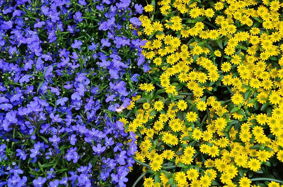 flowers-366155_960_720