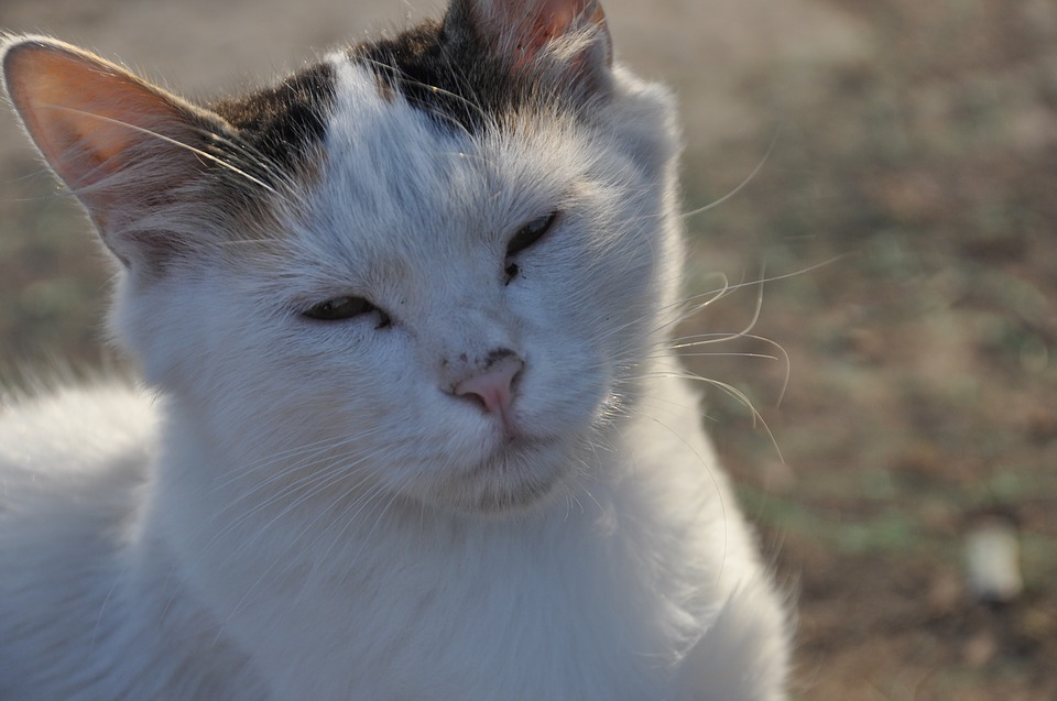 istanbul-2075660_960_720幸せ猫