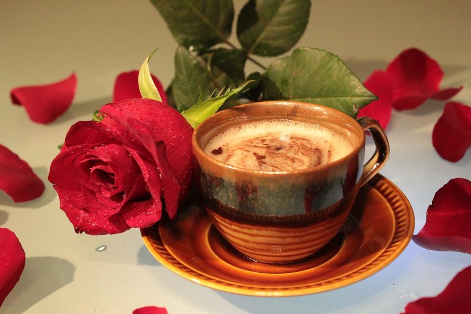rose-1809940_960_720