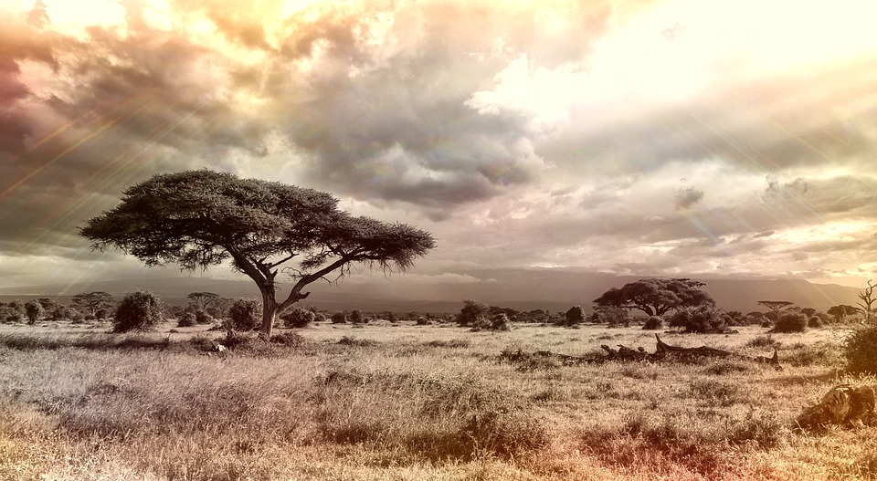africa-944465_960_720荒野