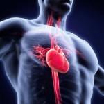 心内膜炎とは?症状・原因・治療法・検査方法を紹介!