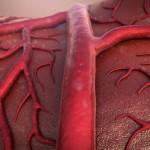 血管若返りの方法について!食べ物や運動、生活習慣の改善方法を紹介!