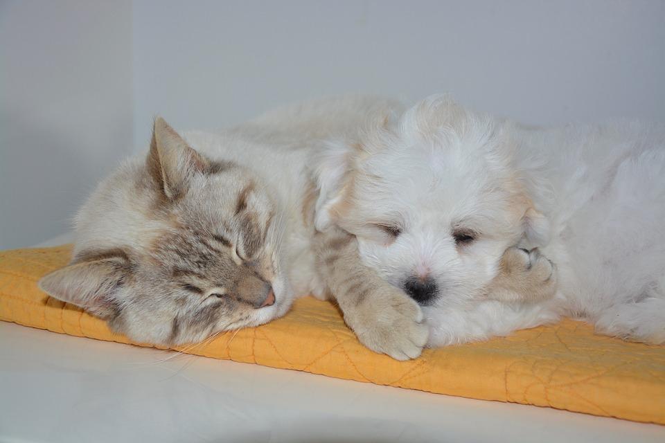 cat-2205051_960_720ワンコとニャンコの昼寝