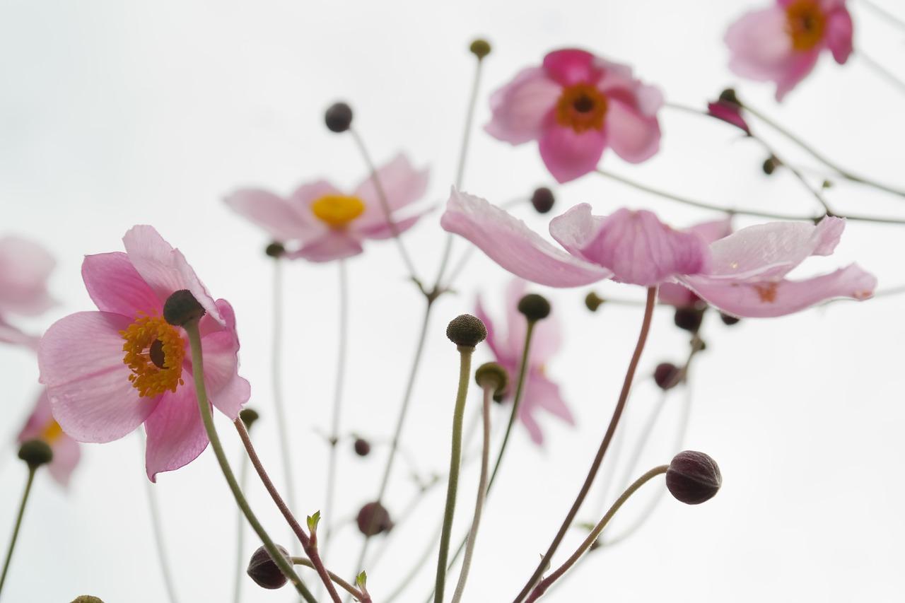 flower-215565_1280
