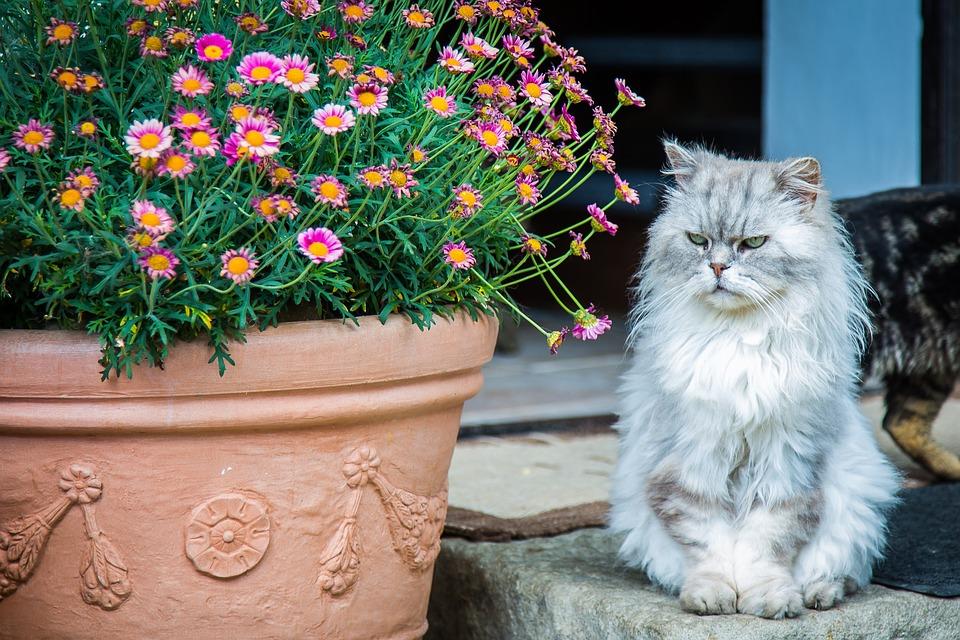 cat-2478172_960_720ツンツン猫