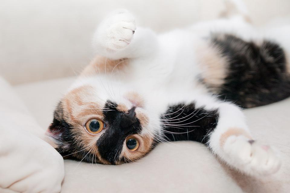 cat-649164_960_720甘える猫