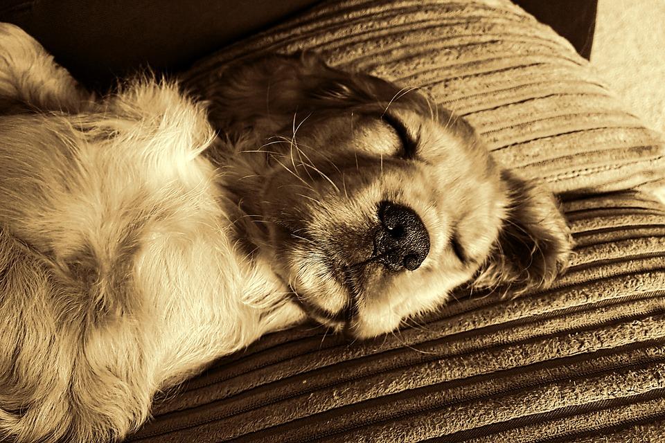 dog-1910381_960_720眠る犬