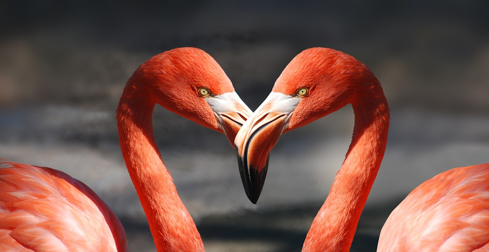 flamingo-600205_960_720目が合う