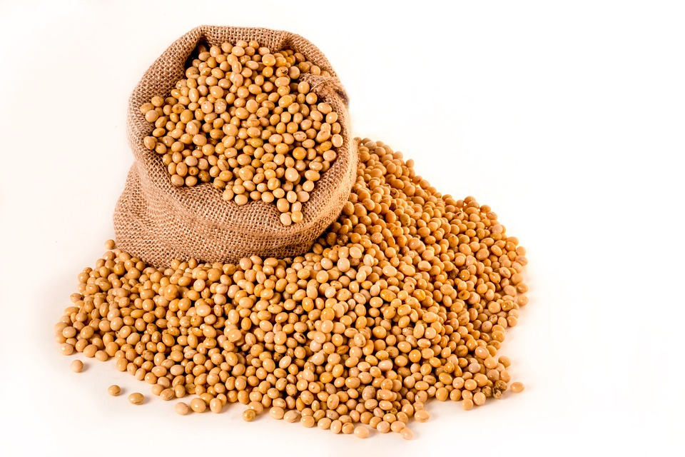 soybeans-2039641_960_720