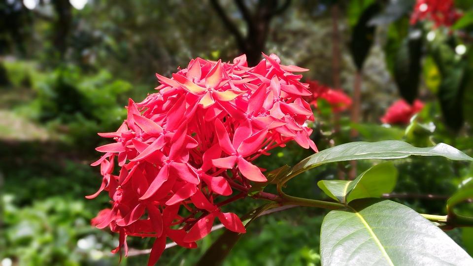 flower-pin-2483439_960_720