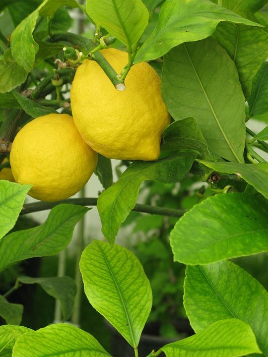 lemon-1094931_960_720