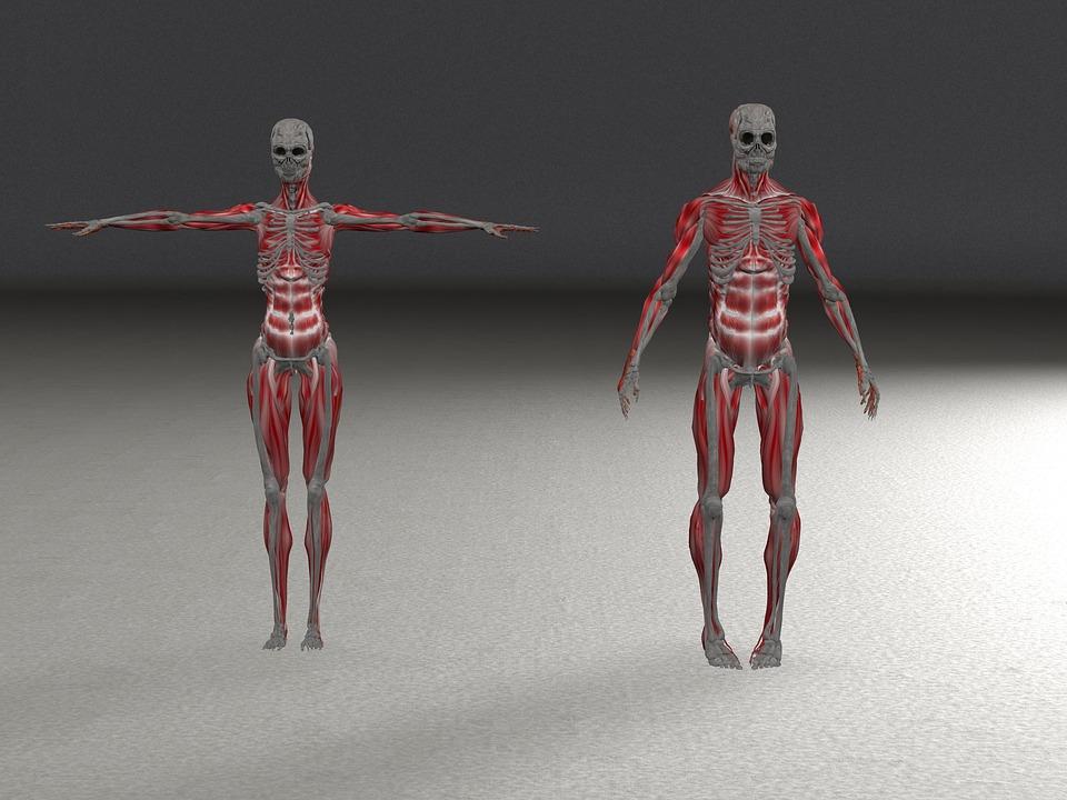 skeleton-1915470_960_720
