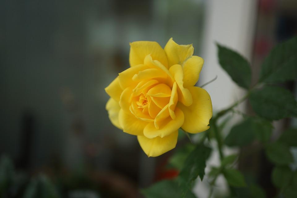 yellow-2325880_960_720