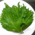 大葉の栄養について!含まれる成分や効果・効能を紹介!