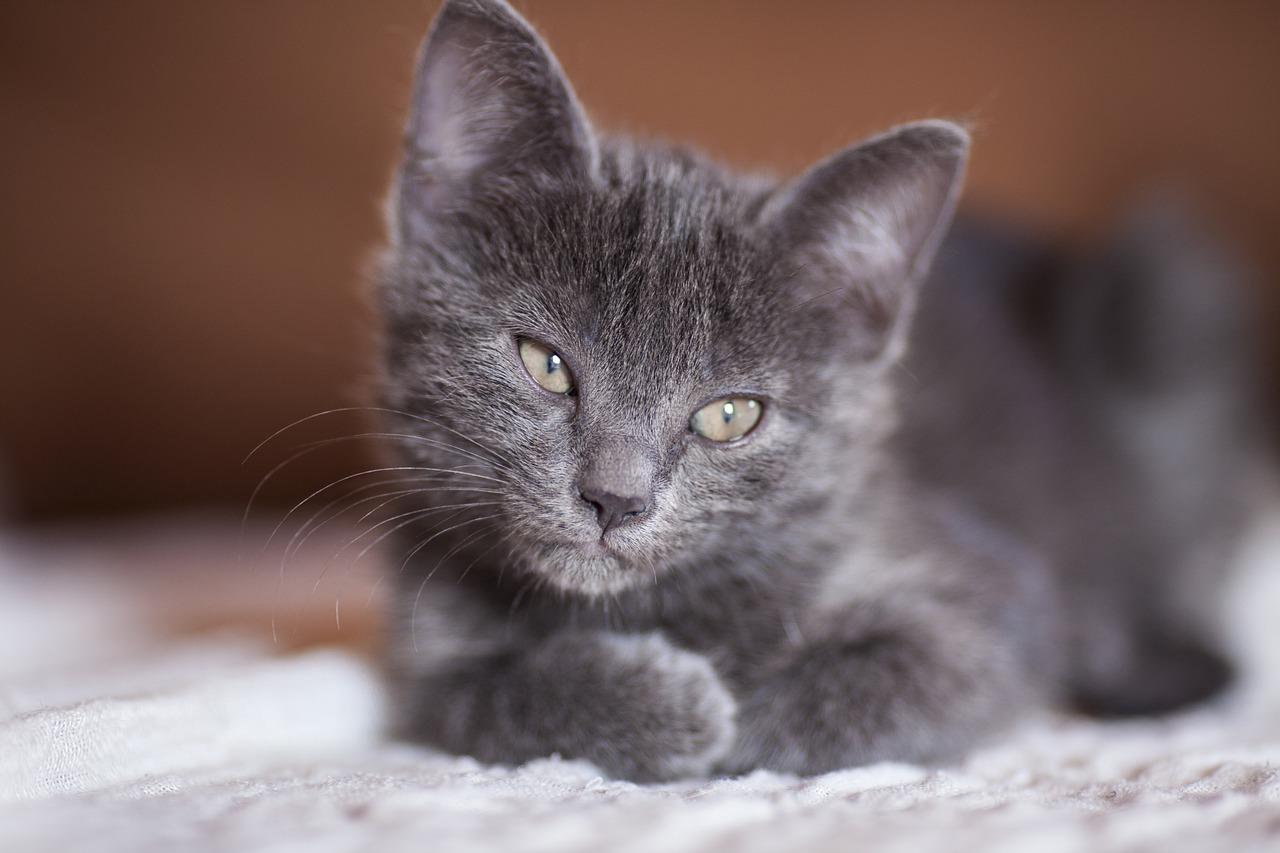 cat-2684445_1280