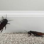 【夢占い】ゴキブリの夢はどんな意味が?良い場合と悪い場合を紹介!