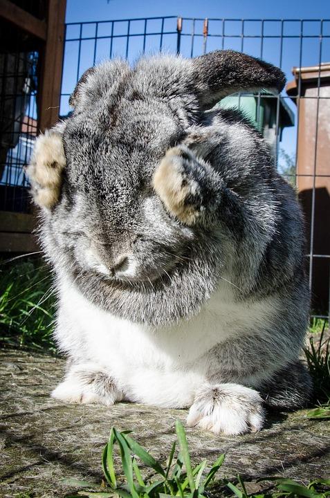 rabbit-963167_960_720