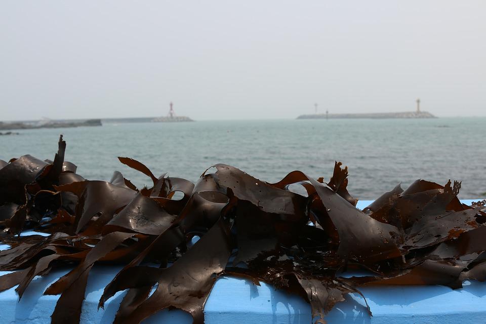 seaweed-2499352_960_720