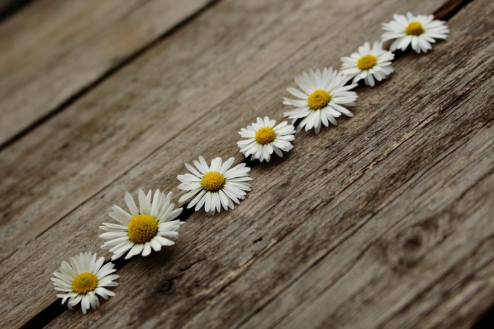daisy-3093410_960_720