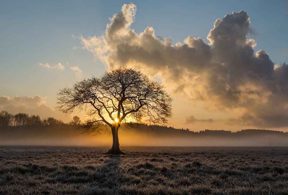 lone-tree-1934897_960_720孤独