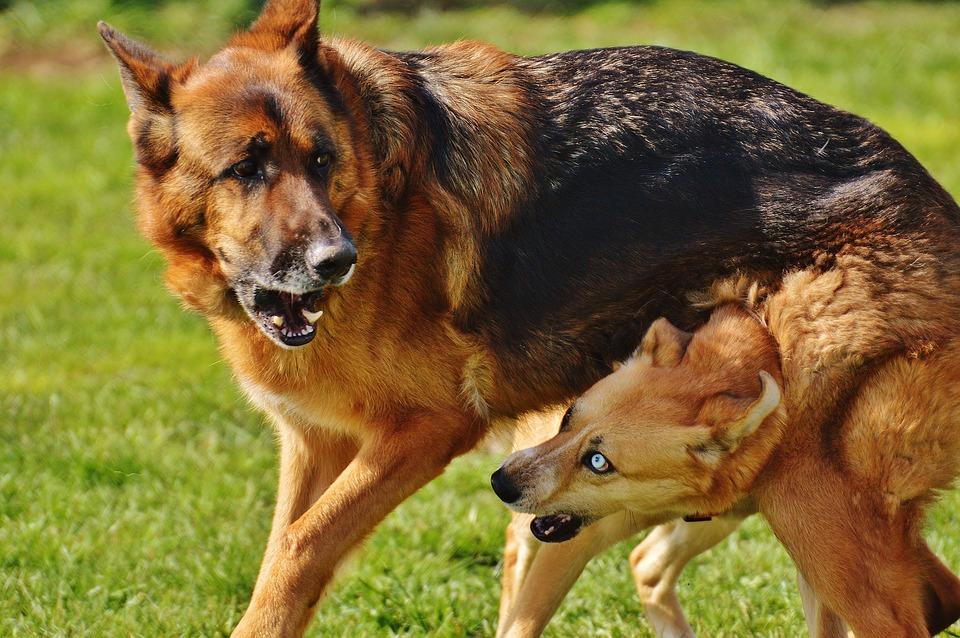 dogs-1615938_960_720怒る犬