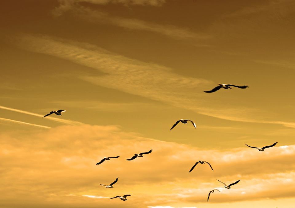 birds-84665_960_720飛翔